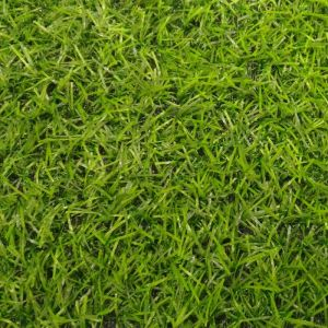 betap_grass_irene_01 (1)